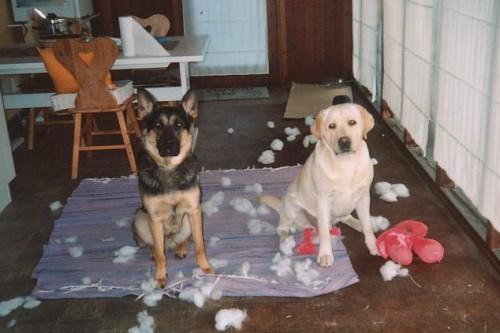 Hunde – Alene Hjemme