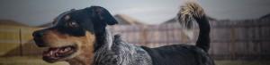 Hundekurser i Storkøbenhavn