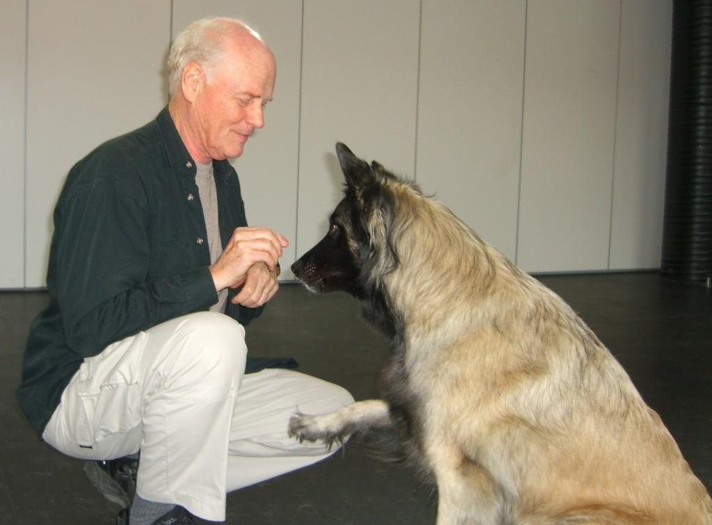 Social stress hos hunde