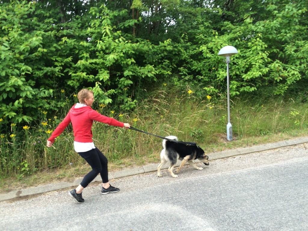 Hund, gå pænt i snor – kursus i Lineføring