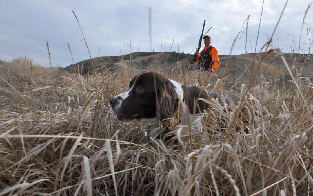 Jagt træning