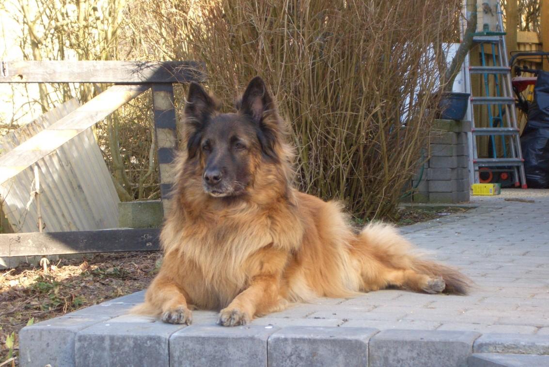 Canis 12 år holder vagt