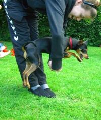 Fri træning for hunde