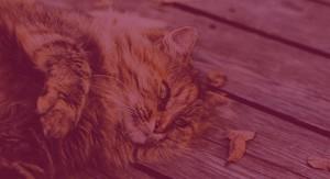 Kattetræning