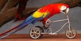 Papegøjetræning