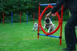 Soft Agility træning for hunde